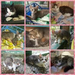 Gattini cercano famiglia al Cascinotto!