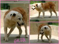Ciao Gilda...