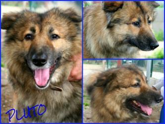 Ciao Pluto...